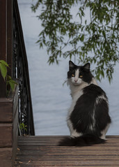 Cat (Lyutik966) Tags: cat animal pet lake shore ostashkov seliger russia coth5