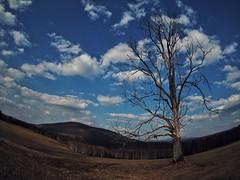 lone tree (paddy_bb) Tags: olympusomd paddybb mft microfourthirds wwwpatblogde 2019 czechrepublic tschechien bohemianforrest