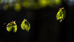 Frühlingsleuchten (Pippilotta aus dem Tal) Tags: sel90m28g