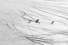 Life in B&W : flying over Sua Pan with an helicopter (Makgadikgadi - Kalahari desert - Botswana) (lotusblancphotography) Tags: africa afrique botswana suapan makgadikgadi kalahari desert désert nature animal zebra zèbres shadows ombres wildlife faune