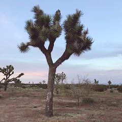 sunset (mennyj) Tags: westcoast nv nevada ca california 104 410 vacation desert mountain spring 2019 mobile iphone iphone7 celebrate