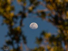 Waxing gibbous Moon (Michael Seeley) Tags: florida melbourne mikeseeley moon moonpictures waxinggibbousmoon