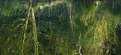 _B5A3885REWS Water, © Jon Perry, 14-4-19 zbp (Jon Perry - Enlightenshade) Tags: classicbridge chiswickhouse dawn chiswick chiswickhouseandgardens lake w4 morning jonperry enlightenshade arranginglightcom 14419 20190414