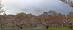 20190401_172310-IMG_3953 (dudegeoff) Tags: osaka japan 2019 april osakacastle 20190323b0401bkixosakacastle cherryblossoms rain
