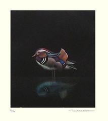 Mandarin duck (Japanese Flower and Bird Art) Tags: bird mandarin duck aix galericulata anatidae toshio suda modern intaglio print japan japanese art readercollection