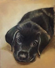 First Day Away From Mommy (rhondawhittington) Tags: pastel painting dog puppy pet animal black labradour sad portrait