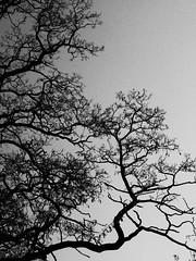 Astwerk (1elf12) Tags: riddagshausen braunschweig germany deutschland klostergarten baum tree äste