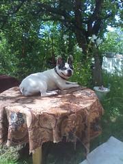 лада (lvv1937) Tags: собака сад цветы стол