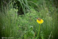 Una mariposa en el camino de búsqueda de un proyecto (charlie.fotografia) Tags: mariposa bogotá urbano naturaleza
