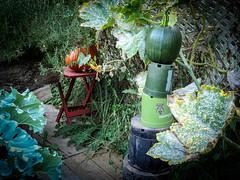 Getting the balance right (Canadian Dragon) Tags: 2018 bc canada dschx5c nanaimo september vancouverisland fall garden plants precarious pumpkin shaky stack support wobble yard