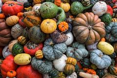 Gourds and Pumpkins (slange789) Tags: dallas arboretum botanical garden