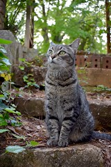 Camille (rootcrop54) Tags: camille female mackerel tabby cat meetingspot steps neko macska kedi 猫 kočka kissa γάτα köttur kucing gatto 고양이 kaķis katė katt katze katzen kot кошка mačka gatos maček kitteh chat ネコ cc100