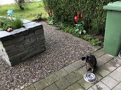 Tabby (tabbynera) Tags: cats garden