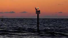 Pelican on Sunset Marker  --  190416235745~2 (mshnaya ☺) Tags: flickr florida compact photo point shoot camera leica leicac candid water marine waterfront channel entrance seascape aquatic sunset jetty