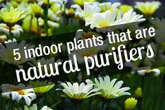 Special Plants | Eco-Hindu (hood04630) Tags: toys
