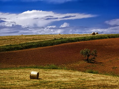 La campagna toscana (1) / The Tuscan countryside (1) (Eugenio GV Costa) Tags: approvato campagna nuvole cielo alberi countryside clouds sky trees outside