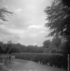 Holga-Acros-02-03.jpg (Mauricio Miret) Tags: holga acros100 ilfosol silverscan epsonv600 bw film blackandwhite