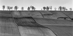 Ribbon fields (fotoswietokrzyskie) Tags: analog mamiya rz67ii sekor 350mm ilford delta400 landscapes trees blackandwhite scan film medium format 6x7 monochrome tree