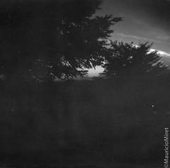 Holga-Acros-04-07.jpg (Mauricio Miret) Tags: holga acros100 ilfosol silverscan epsonv600 bw film blackandwhite