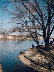 (Jack182_rus) Tags: m43 olympus omd em10ii leica summilux 15f17 landscape ducks river garden spring vsco people guls embankment