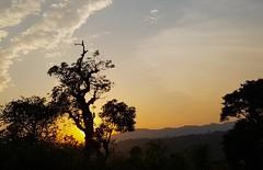 Sunset @ Chikmagalur (RamaWarrier) Tags: chikmagalur malenad karnataka sunset shooting point siri mallandur tree silhouette orange sky evening against sun light bluish grey