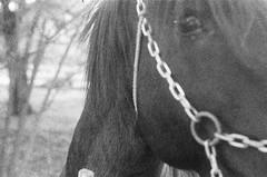 Kodak tmax 3200 (alfonso.toledo.andrade) Tags: summar50mm leica leicaiiic kodak tmax 3200 summarf2 35mm 35mmfilm blackwhite