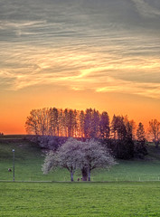 (Claude@Munich) Tags: germany bavaria upperbavaria badtölzwolfratshausen dietramszell peretshofen trees blooming silhouette evening sunset sky clouds cirrus claudemunich bayern oberbayern bäume obstbäume blühend sonnenuntergang abend abends abendstimmung abendrot himmel wolken zirrus