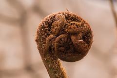 20190410_DSC1050 (Leo Ad) Tags: flora kruidtuin leuven macro