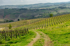 Vineyards of Oltrepo Pavese in April (clodio61) Tags: april europe italy lombardy oltrepopavese pavia agriculture color country day field green hill land landscape nature outdoor path photography plant road rural scenic spring springtime sunny vine vineyard