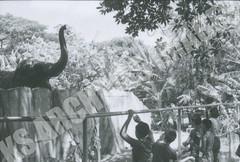 EXP69-138-5-1-6869 (Kamehameha Schools Archives) Tags: kamehameha archvies ks ksg ksb oahu kapalama luryier pop diamond 1969 1968