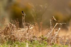 20190415-D4S_0899 (Bartek Olszewski) Tags: birds ptaki bird kukulka wood wildlife wild woods wings nature nikon natura nikond4s