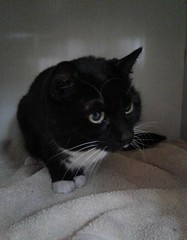 Millie - 2 year old spayed female