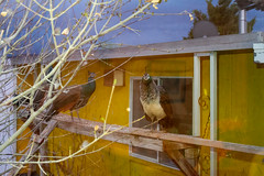 2019-04-nv-shady-lady-mjl-044 (Mike Legeros) Tags: shadylady beatty nv nevada brothel bb bedandbreakfast bedbreakfast