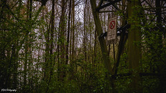 Danger for life (bdg-photography) Tags: natur naturephotography nature branch branches tree trees forest forests tower power line danger watch out watchout green abandoned metal outside