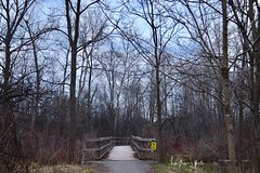 The Bridge to Spring (Haytham M.) Tags: sunset dusk tree forest wooden wood bridge outdoor outdoors stroll walk april trees spring