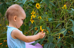 Annabelle Jane (Buck--Fever) Tags: annabelle sunflowers flowers kids arizona canon60d tamron18400lens