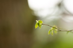 New (Future-Echoes) Tags: 4star 2019 bokeh depthoffield dof essex hillhousewood leaf leaves new spring woodland