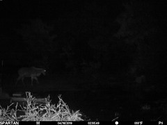 2019-04-18 02:55:49 - Crystal Creek 2 (Crystal Creek Bowhunting) Tags: crystal creek bowhunting trail cam
