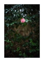 2019/3/16 - 7/15 photo by shin ikegami. - SONY ILCE‑7M2 / Voigtlander NOKTON CLASSIC 40mm f1.4 SC VM (shin ikegami) Tags: asia sony ilce7m2 sonyilce7m2 s7ii 40mm voigtlander nokton nokton40mmf14sc tokyo photo photographer 単焦点 iso800 ndfilter light shadow 自然 nature 玉ボケ bokeh depthoffield naturephotography art photography japan earth