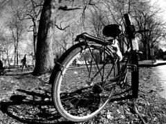 Bike parked in Square-Saint-Louis (Montreal) (MassiveKontent) Tags: bwphotography streetshot park trees bike bicycle lines montreal bw contrast city monochrome urban blackandwhite streetphoto montréal quebec canada photography concrete shadows noiretblanc blancoynegro noir silhouette