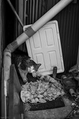猫 (fumi*23) Tags: ilce7rm3 sony street a7r3 animal cat chat katze gato neko bw blackandwhite nokton voigtlander fmount 58mm voigtländernokton58mmf14slⅱ cosina manualfocus monochrome ねこ 猫 ソニー コシナ フォクトレンダー モノクロ