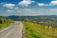 Vineyards of Oltrepo Pavese in April (clodio61) Tags: april europe italy lombardy oltrepopavese pavia agriculture color country day field flower green hill land landscape nature outdoor photography plant road rural scenic spring springtime sunny vine vineyard yellow
