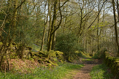 Spring Leaps Into Action (Feversham Media) Tags: haverthwaite cumbria levenvalley southlakes southlakeland