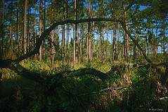 Framed (surfcaster9) Tags: trees shadows nature florida lumixg7 lumix20mmf17llasph outdoors forest
