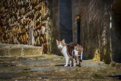 I gatti non obbediscono - Cats don't obey (Eugenio GV Costa) Tags: approvato gatto cat gatti cats animal animalidomestici