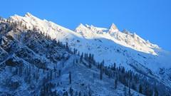 Sunshine on mountain tops! (solarisgirl) Tags: kalga snow white mountain peak rocky sunshine sunrise trees himachalpradesh