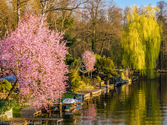 Spring in New-Venice (Part of Berlin-Köpenick) (Steppenwolf33) Tags: spring newvenice köpenick steppenwolf33 canal water flowers tree