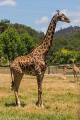 SafariWest-_DSC1482 (Vamsi K) Tags: california nature safari wildlife google santarosa ca usa