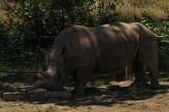 SafariWest-_DSC1534 (Vamsi K) Tags: california nature safari wildlife google santarosa ca usa