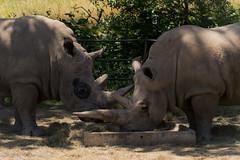 SafariWest-_DSC1539 (Vamsi K) Tags: california nature safari wildlife google santarosa ca usa